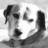 Brownie the town dog of Daytona Beach logo