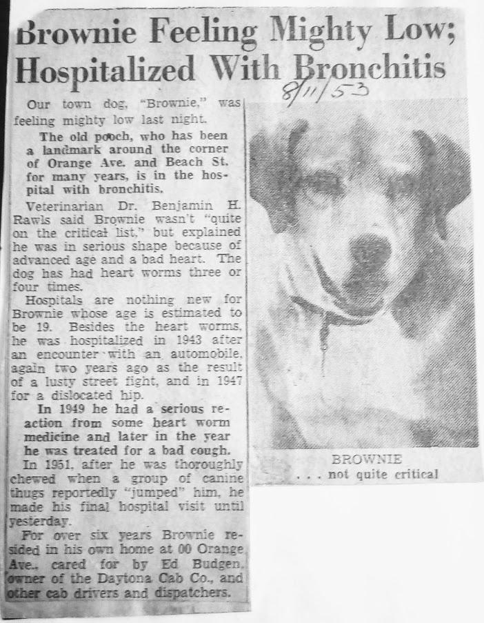 Brownie gets Bronchitis Aug 11, 1953