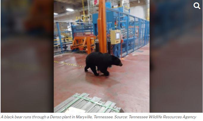 Black bear 3_1554917209268.JPG.jpg