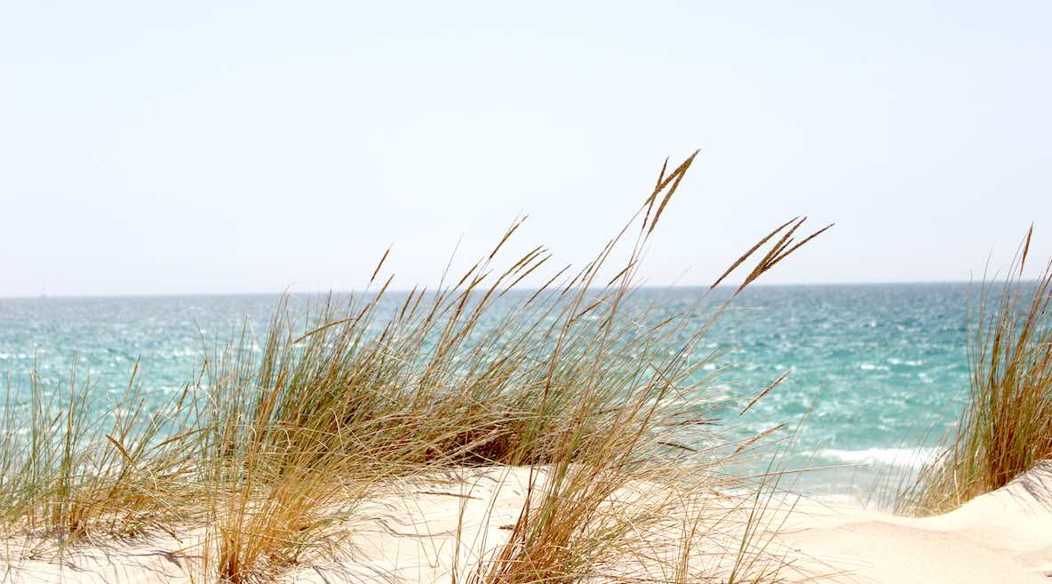 Seagrass waves in almost-white sand dunes at the seashore. Beyond the open ocean and the possibility of goals achieved.
