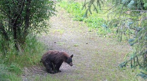 George Osborne tells us that bears poo in the woods