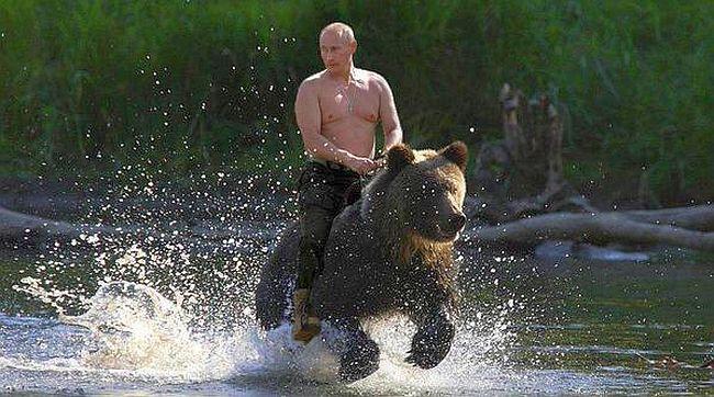 Putin bear 650