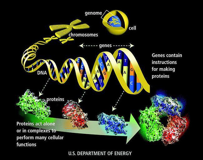 genome 650