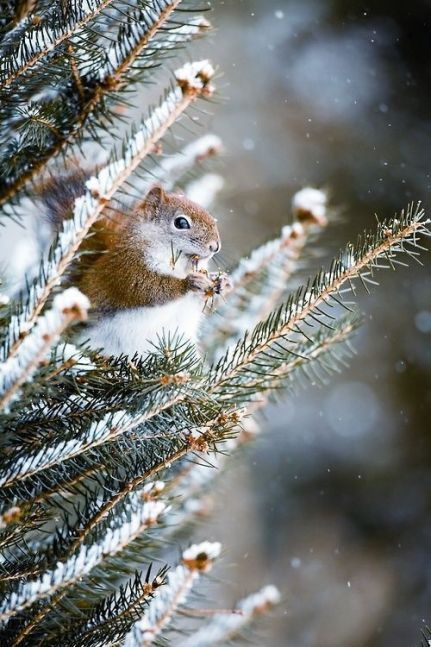ekorn-snø-vinter