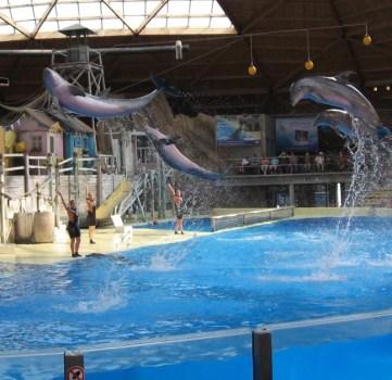 Kan dolfinarium open blijven na verstrenging wet op dierentuinen?