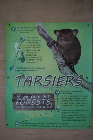 Philippine Tarsier and Wildlife Sanctuary