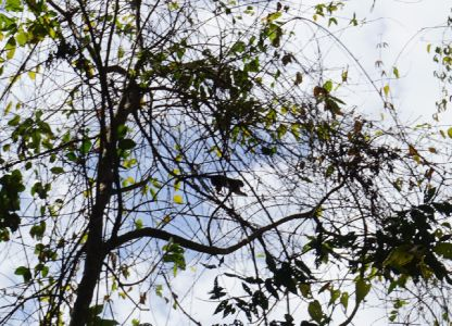 Monkey in Parque Metropolitano