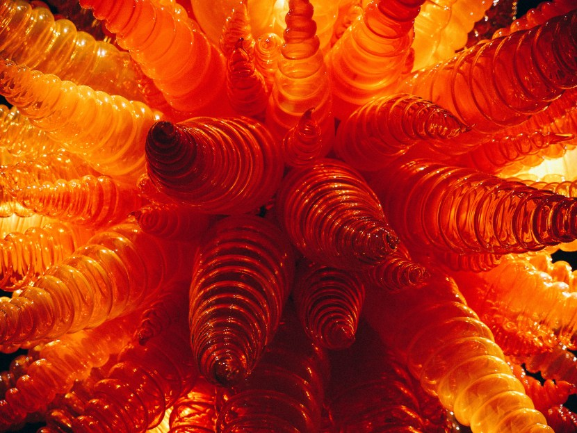 chihuly 35
