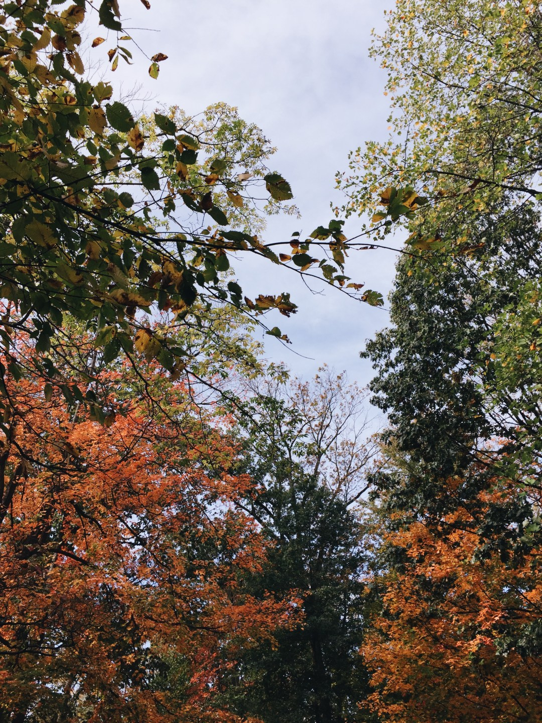 autumnal trees, haverford college - weekly update | brunch at audrey's