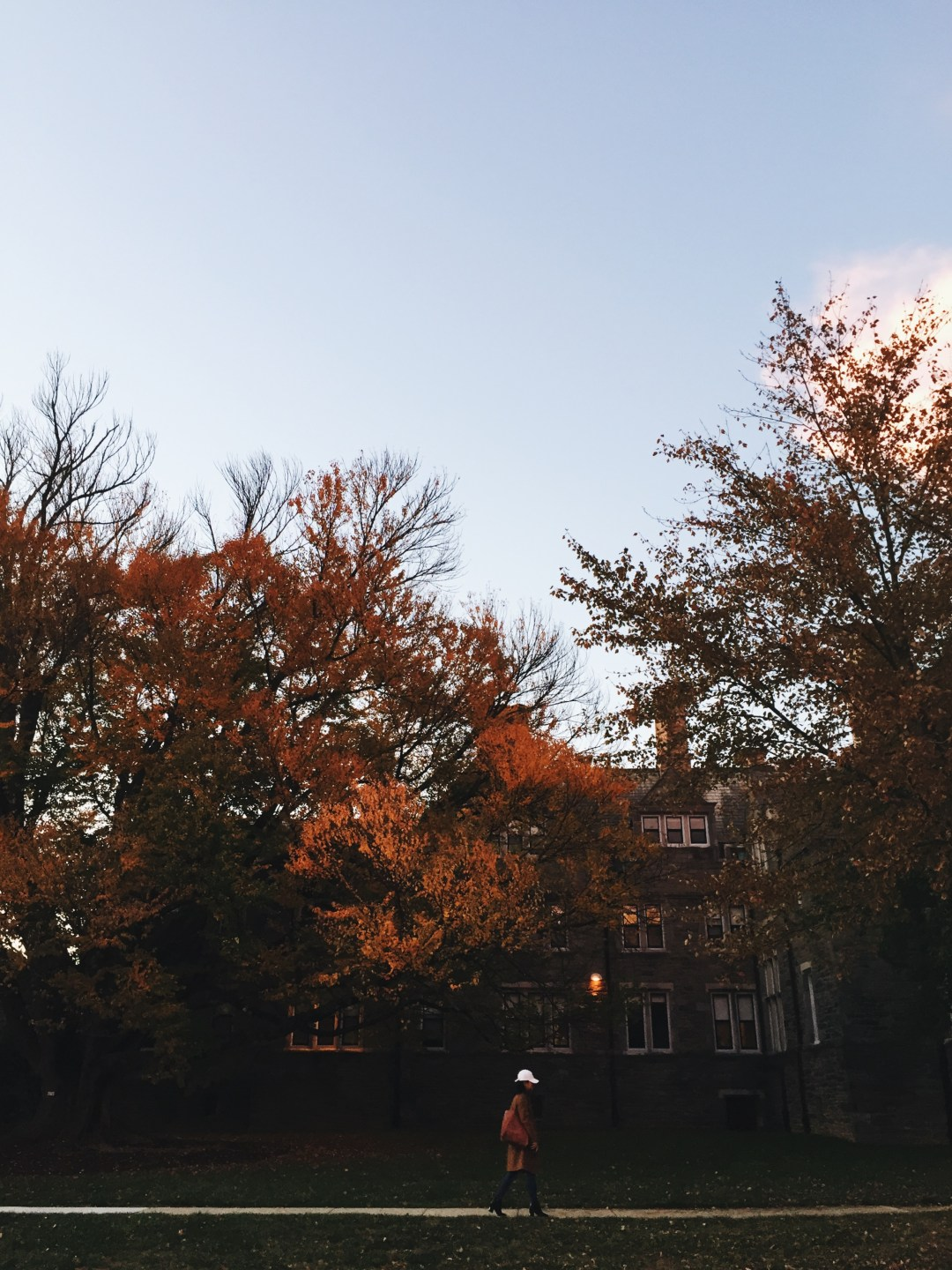 autumnal trees, bryn mawr college - weekly update | brunch at audrey's