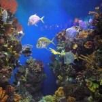 Brussels Aquarium