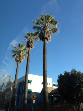 Sacramento Palm Trees