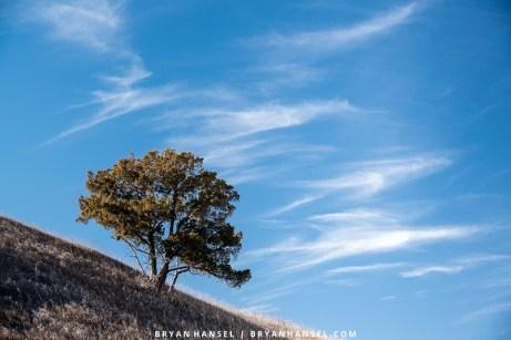 tree on slope