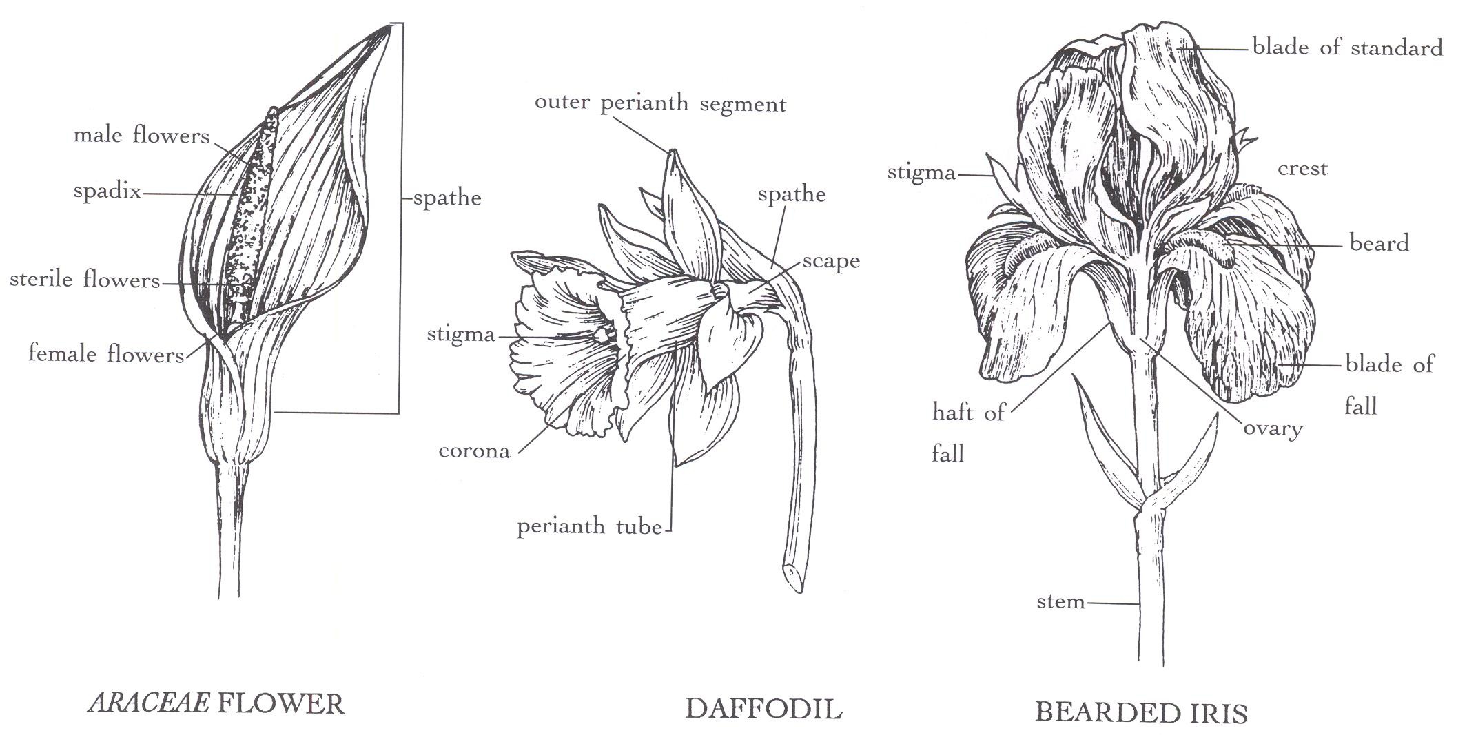 Diagram Part Flower Structure