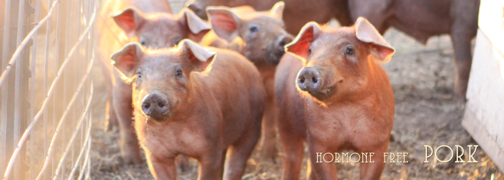 2014headerbanner-pork