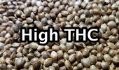 001 high thc