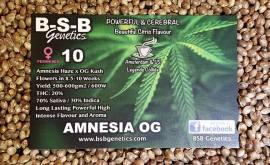 amnesia og seeds photo 001