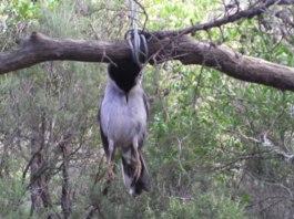 Caccia, un uccellino ucciso da una trappola abusiva