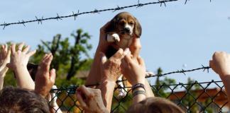 Liberazione di uno dei cuccioli di Green Hill