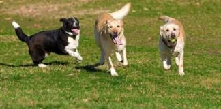 Cani al parco