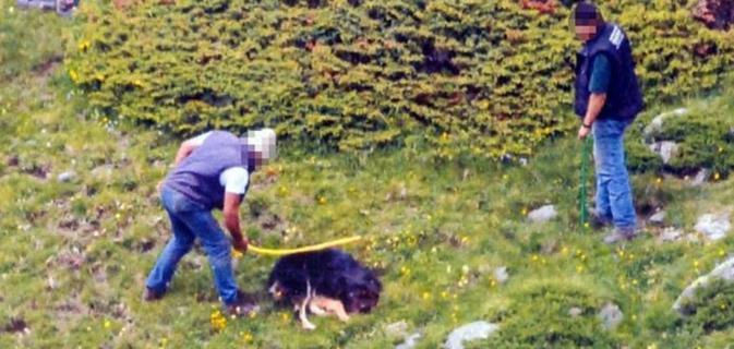 Una scena del filmato in cui un allevatore di Breno uccide il proprio cane in alpeggio - da web - www.bsnews.it