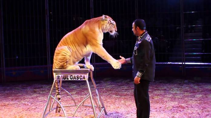 Circo, foto da web generica
