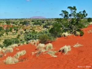 """19. """"Il punto è che quando finalmente arrivate ad Uluru vi siete già un po' rotti. Anche quando siete a mille km di distanza, non passa giorno in Australia senza che la vediate quattro, cinque o sei volte. Così mentre vi dirigete verso l'entrata del parco, vi rendete conto che avete guidato per duemila km per vedere un grande oggetto inerte, a forma di pagnotta, che avete visto fotografato già un migliaio di volte. Ma quando lo vedete rimante trafitti all'istante. Lì, nel mezzo di un memorabile e imponente vuoto, si erge un'eminenza di eccezionale nobiltà e splendore, alta 350 metri, lunga due km e mezzo, con una circonferenza di quasi 9 km e per mille versi più stupefacente di quanto non avreste mai potuto supporre."""" Bill Bryson – In un paese bruciato dal sole - Un salto in Australia, mostra fotografica di un viaggio on the road dei bresciani Patrizia Pietropaolo e Matteo Beschi"""