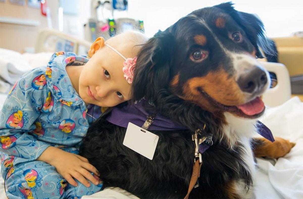 Cani In Ospedale Ecco Dove Si Possono Portare A Brescia E Provincia
