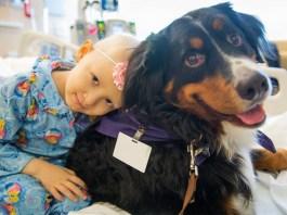 Sono numerosi gli ospedali di Brescia e provincia in cui è possibile portare cani, gatti e conigli