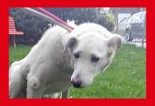Flora, il cane perso due anni fa e trovato sul Garda