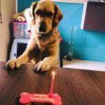 Una torta di compleanno per cani, foto dalla pagina della pasticceria per cani di Brescia