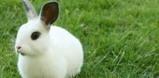 Un coniglietto