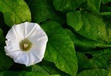 Finchimica di Manerbio è la società leader del mondo occidentale per la produzione e la distribuzione di dinitroaniline, principi attivi, principalmente erbicidi, tra i più conosciuti ed apprezzati del mercato agrochimico