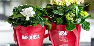 La gardenia e l'ortensia di AISM