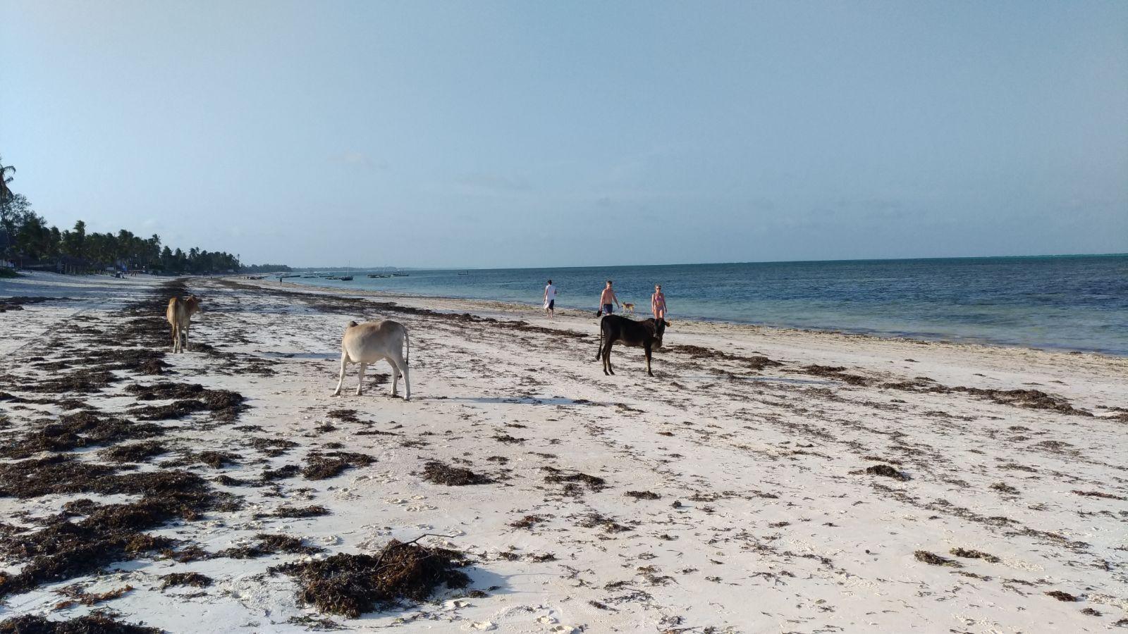 Consigli Guida PochissimoLa Zanzibar Andare Spendendo Dieci A Per hrtQxodBsC