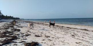 Zanzibar, spiaggia di Jambiani, foto Andrea Tortelli per BsNews.it