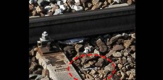 Siringa tra i binari della stazione di Bergamo, segnalazione di una lettrice