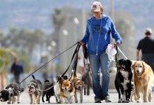Passeggiata a Brescia con i cani, foto generica
