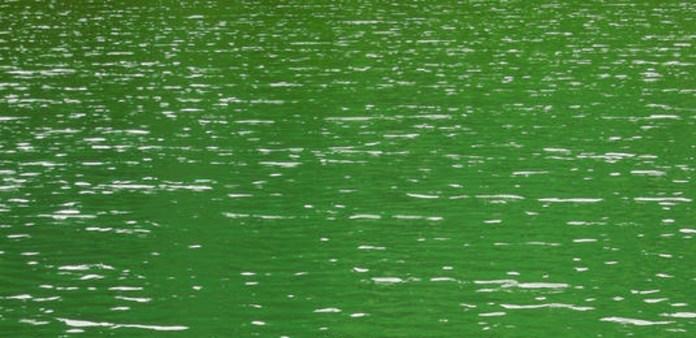 Acqua verde