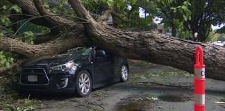 Un albero caduto su un'auto, foto d'archivio