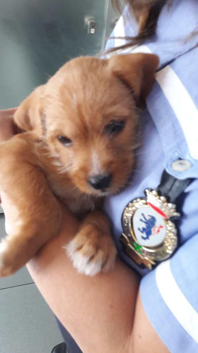 Uno dei cuccioli ritrovati dalla Polizia locale di BresciaUno dei cuccioli ritrovati dalla Polizia locale di Brescia