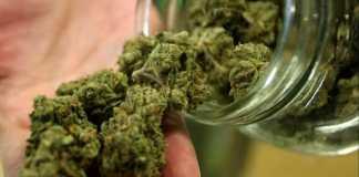 Marijuana, foto d'archivio