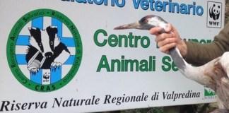 La gru nel centro recupero animali selvatici del Wwf