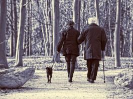 un cane a passeggio con i suoi padroni - foto generica