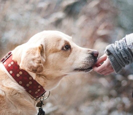 Un cane, foto generica da Pixabay
