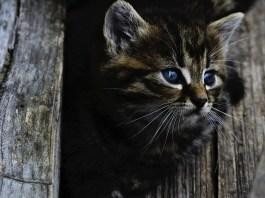 gattino - foto generica