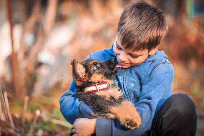 Un pastore tedesco con un bambino, foto generica