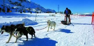 Valcamonica, slitta con cani, foto Visit Brescia