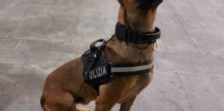 Kimon, cane poliziotto - foto da ufficio stampa Polizia