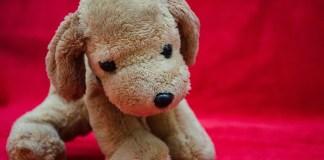 peluche - cane - Foto di PDPics da Pixabay
